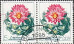 GDR 1983 Cactus plant Coryphantha elephantidens postage stamp plate flaw Tiny breach in left frame.